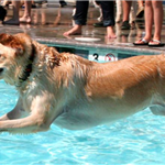 Drool in the Pool (photo by Heritage Humane Society)